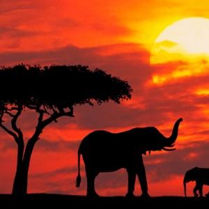 Spotkanie z Afryka I